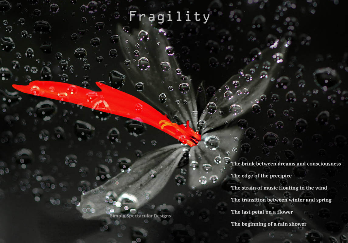 Fragility - A poem - By Ronald Janki - Simply Spectacular Designs